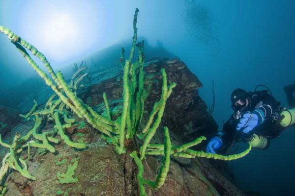 foto-taucher-unterwasserfotografie-baikalsee-baikalschwaemme-unterwasserlandschaft-32AE5FC4C-1B2A-E448-D740-84A53A831ECE.jpg
