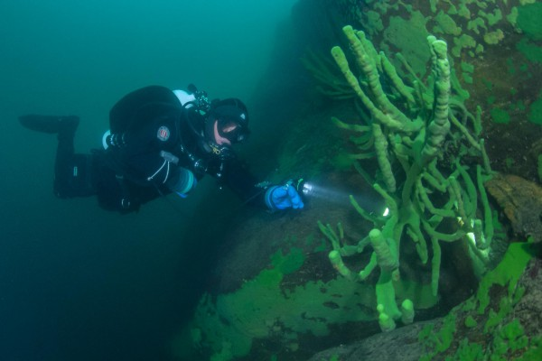 foto-taucher-unterwasserfotografie-baikalsee-baikalschwaemme-unterwasserlandschaft-64B46A19B-744E-9AD4-CAFD-1F9365FACE41.jpg