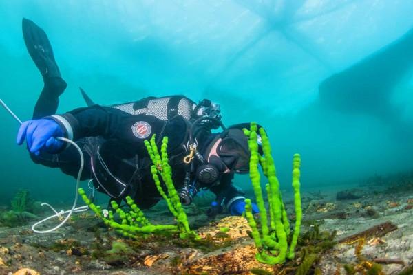 foto-taucher-unterwasserfotografie-baikalsee-eistauchen-februar65F546F7-5AF8-8AF1-8D13-99295BA294B3.jpg