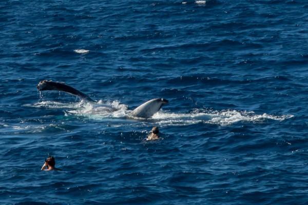 13-foto-taucher-unterwasserfotografie-hawaii-kona-buckelwalDE685E21-BA91-862C-AEA1-55C933AD61D6.jpg