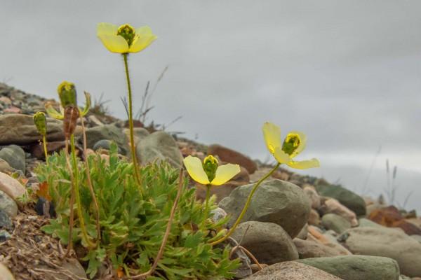 07-foto-taucher-fotografie-arktis-svalbard-mohn-longyearbyenA56896AF-A3AF-5DD5-3BC3-519E7165EE24.jpg