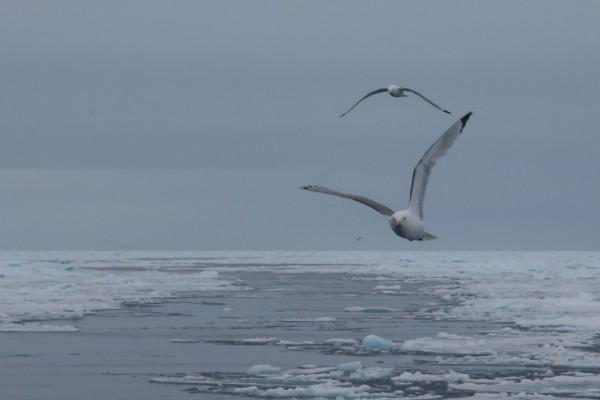 11-foto-taucher-fotografie-arktis-svalbard-packeis-moeven70B82DBF-1515-7EA5-F32B-37CCC00E776C.jpg