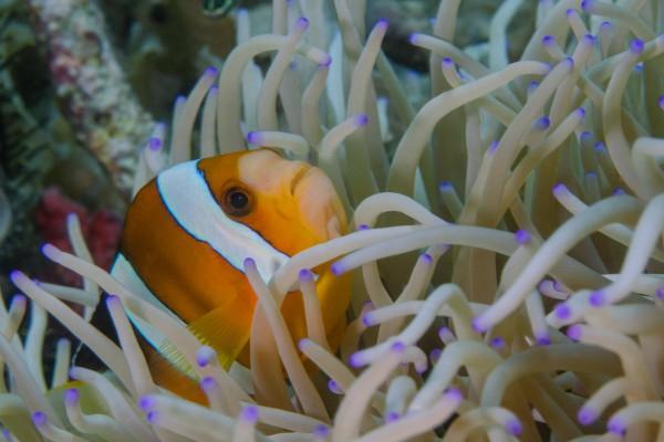 foto-taucher-unterwasserfotografie-indonesien-komodo32B15323-4C75-C063-F92A-A978372D10B0.jpg