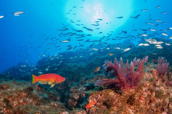 foto-taucher-unterwasserfotografie-azoren-faial-s-y-saildive-liveboard-katamaran-buntes-unterwasserleben-waterworld-tauchreisenD6C6B3D3-DC97-63E5-51F9-8D121CA0FA3E.jpg
