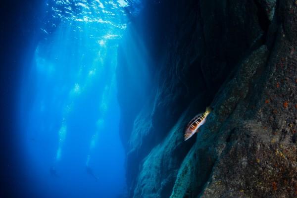foto-taucher-unterwasserfotografie-azoren-faial-s-y-saildive-liveboard-katamaran-hoele1635BEBA-45D0-36B2-514A-89D39C211D7D.jpg