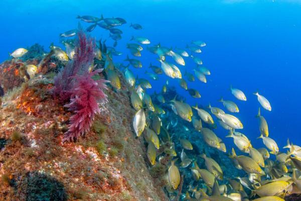 foto-taucher-unterwasserfotografie-azoren-faial-unterwasserleben9C8D1144-5608-5931-F73D-B7A1F6ED473E.jpg