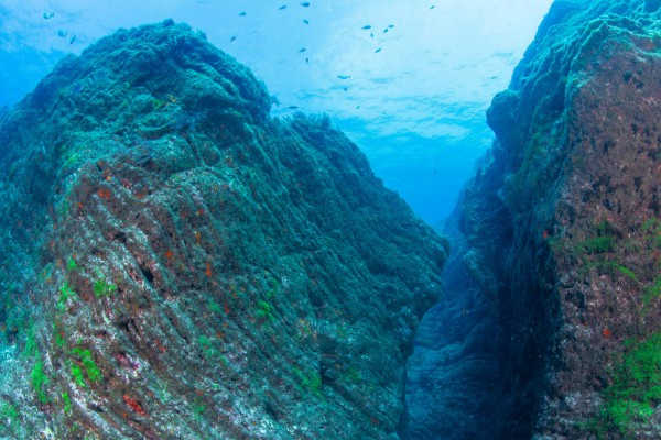 foto-taucher-unterwasserfotografie-azoren-pico-wand420759A0-C6B3-D29D-57A1-E90BAD8CDEDA.jpg