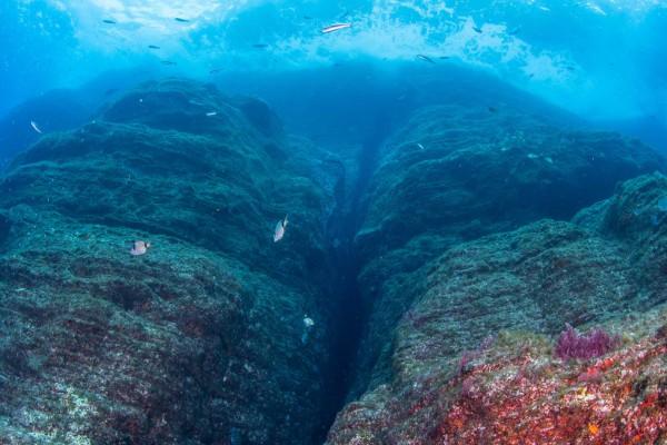 foto-taucher-unterwasserfotografie-azoren-pico7F2D63BC-74E1-045A-84D6-8D75E798CD88.jpg