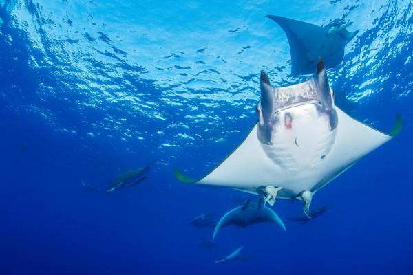 foto-taucher-unterwasserfotografie-azoren-princess-alice-bank-mobulas-s-y-saildive-liveboard-katamaran-waterworld-tauchreisen4C532AA5-4E81-BDED-BF83-B1F95FA4DA2F.jpg