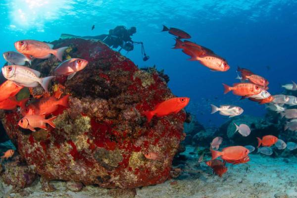 foto-taucher-unterwasserfotografie-seychellen-granitblock-soldatenfischeD93EF3E1-A687-8A45-A281-2B2320EC593C.jpg