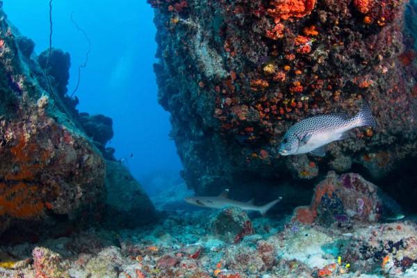 foto-taucher-unterwasserfotografie-seychellen-granitblock-weissspitzenriffhai4EA5C6F4-7C64-4A33-B36F-7B8D2644735F.jpg