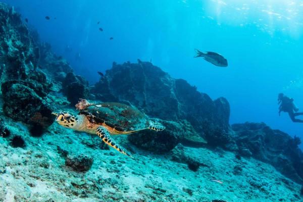 foto-taucher-unterwasserfotografie-seychellen-schildkroete0590398A-37B3-C756-0C39-CBC67433DD1B.jpg