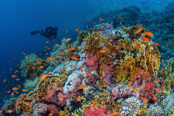 foto-taucher-unterwasserfotografie-aegypten-korallenrifC9A71DA3-32DB-FCC8-FB86-AD9D524CEAD9.jpg