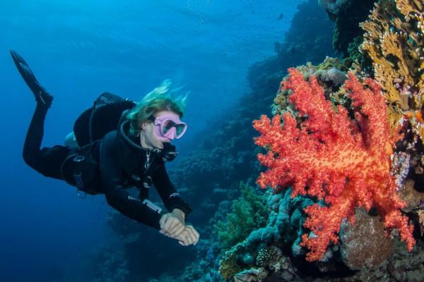 foto-taucher-unterwasserfotografie-aegypten-weiche-koralle32080D1B-6C22-B63E-26AD-6C865F702EC0.jpg